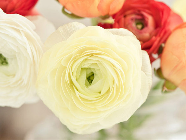 Questions You Need to Ask Your Florist