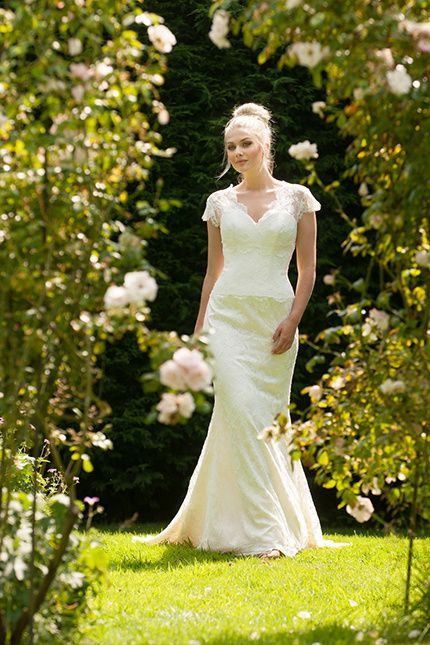 cantebury rose, Lyn Ashworth
